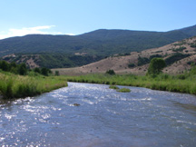 Diamond Fork and Sixth Water Creeks Riparian Vegetation, Geomorphic, and Benthic Macroinvertebrate Monitoring