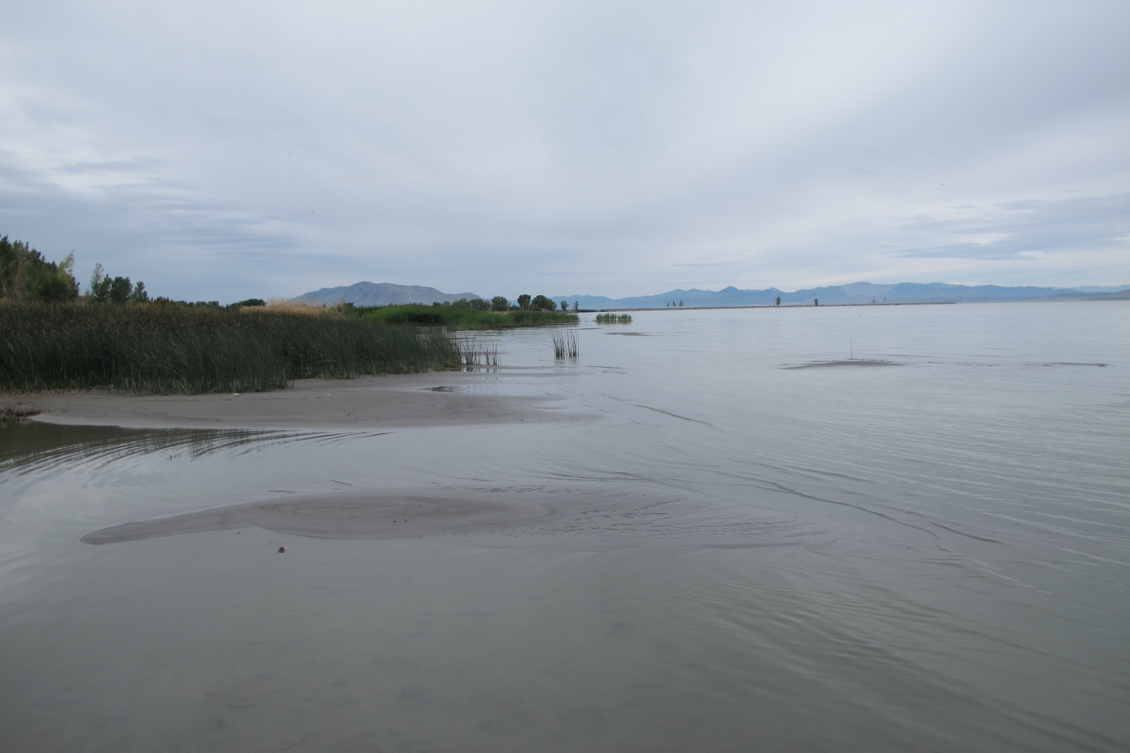 LPRD beach veg and shallow later water 1