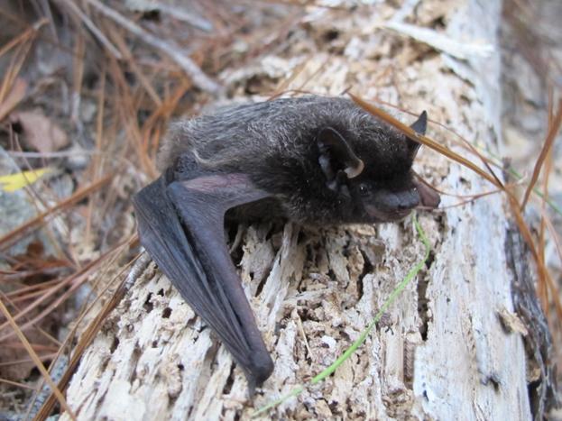 batty 1