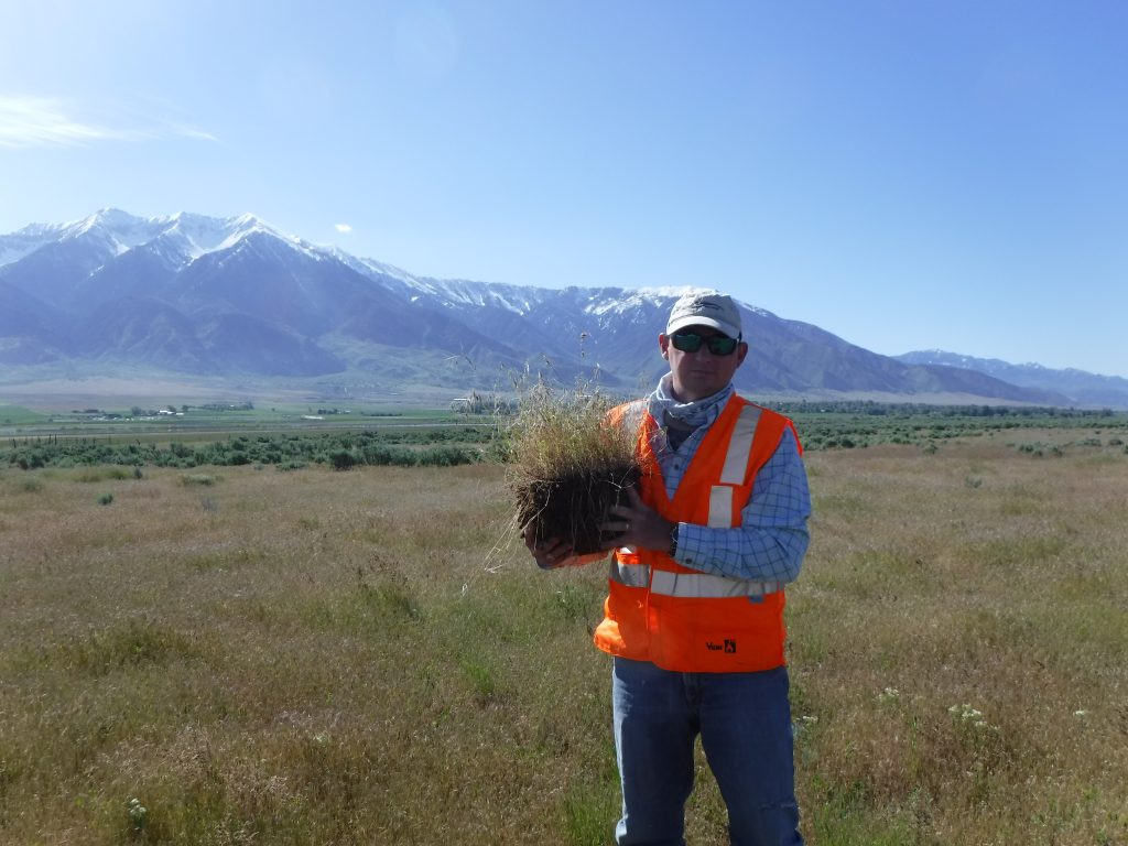 BIO-WEST employee Andy Boswell holds a plant sample taken during a survey of the Clover Creek Solar project area.